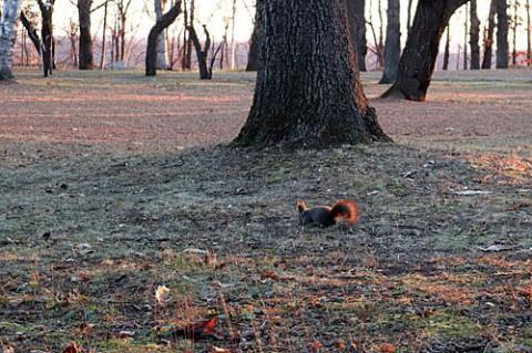 落ち葉が片付けられた公園