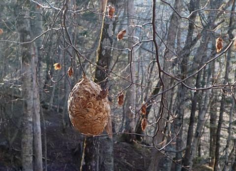 一番怖い蜂の巣