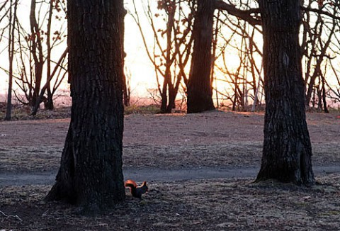 早朝ウオークはすずらん公園で