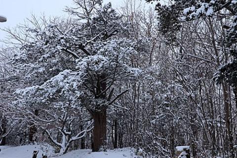 朝は8センチの雪だったけど・・
