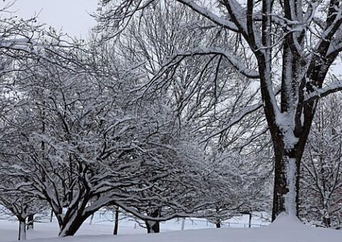 あずさ公園の雪景色