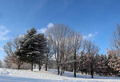 新雪と青空と樹木の影
