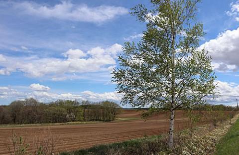 幕別町春の畑
