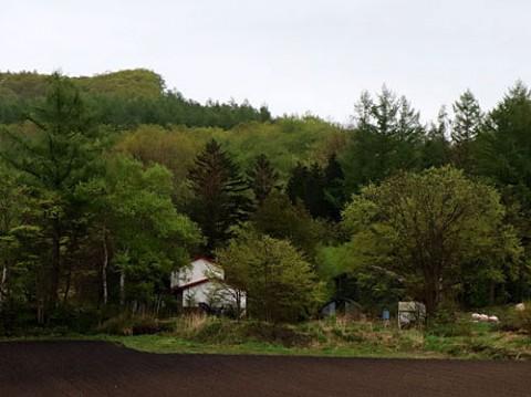 新緑の中の廃屋