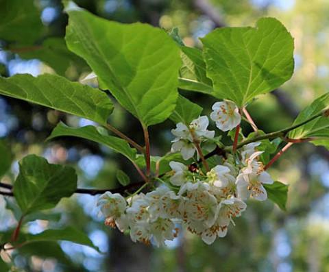 三股の山で咲いていた花