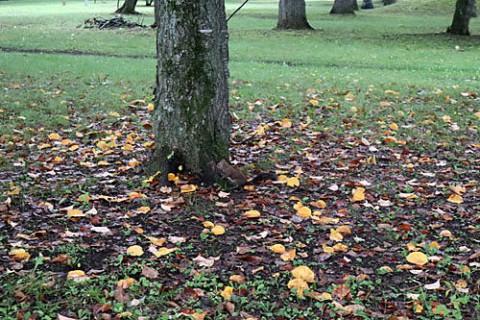 すずらん公園は秋の気配