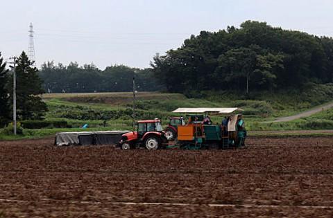 ジャガイモ収穫が最盛期