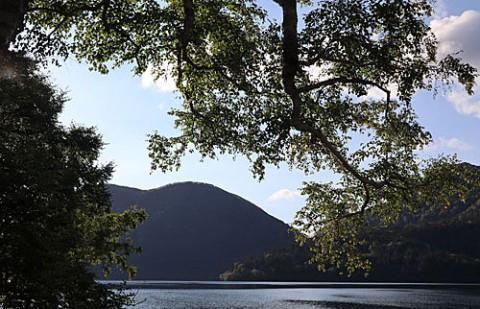巨木が多い然別湖