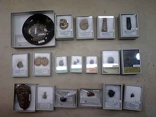 化石も、セール中ですよ!