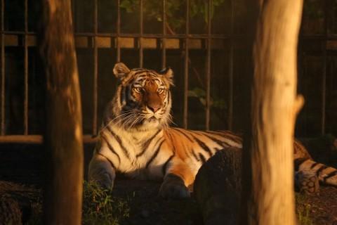 「よるの動物園」 7月31日スポットガイド予定