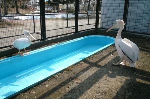 祝!プール開き!