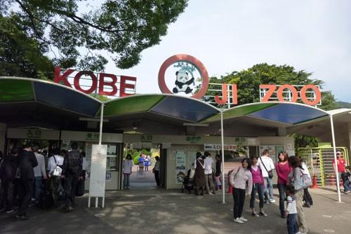 きりん娘 in 神戸市立王子動物園