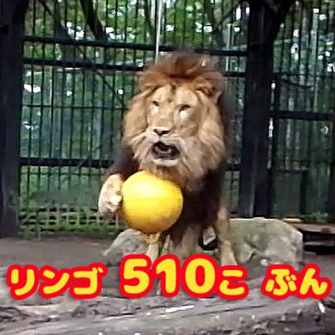 ヤマトの初挑戦