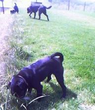 犬の社会化のトレーニング