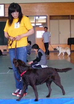 優良家庭犬認定試験後の講習で