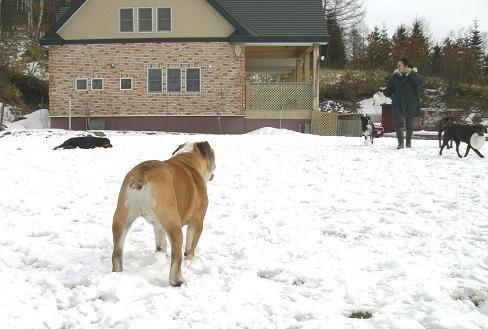 雪が降らなくて~