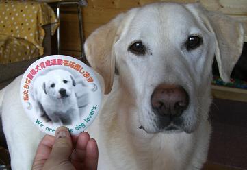 盲導犬育成のサポーター