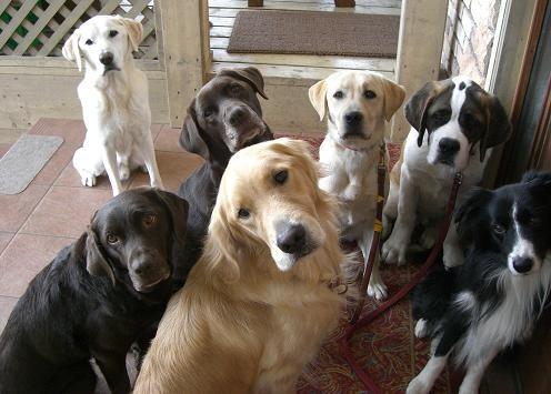 犬同士仲良し^^!!パチリ