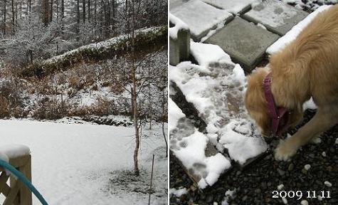 雪げしき♪でもワン達は仲良しです