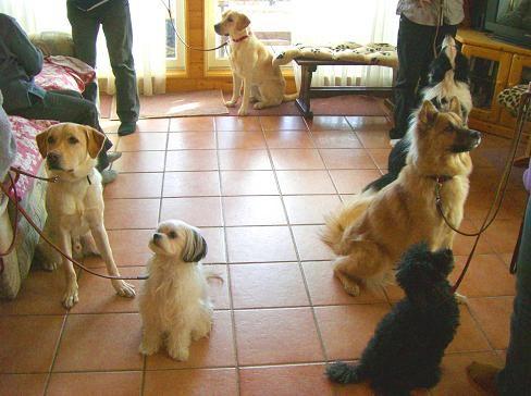 犬のしつけミドルクラスを開催しました