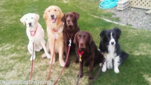 優良家庭犬認定試験第46回GCT