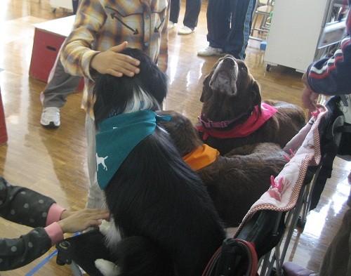 小学校での動物介在活動の一コマ