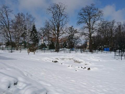 余計な雪が降りました