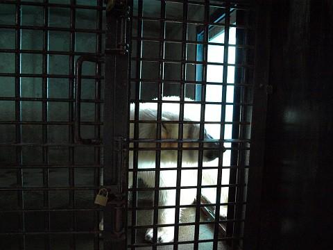 2010 5月 8年前のホッキョクグマの写真 イコロとキロル