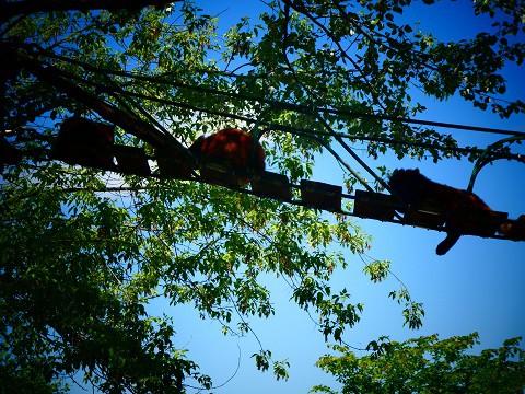レッサーは 高山動物です 旭山動物園