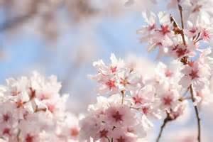 春ですね~♪出没しますよ!
