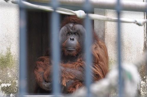 6月14日 旭山動物園 ジャックとゲンちゃん
