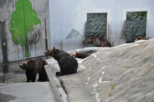 7月24日 釧路市動物園 エゾヒグマ