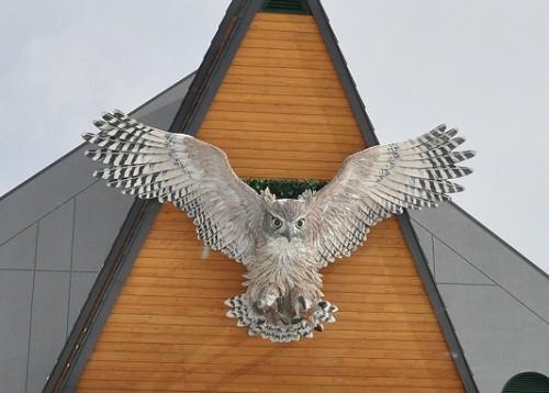 2月12日 釧路市動物園 シマフクロウ