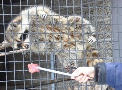 3月10日 おびひろ動物園 冬の裏側探検隊 小獣舎