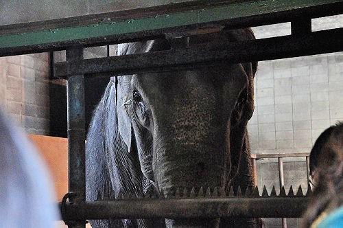3月10日 おびひろ動物園 冬の裏側探検 ゾウ