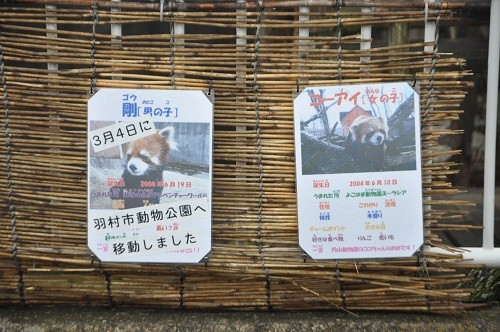 4月26日 釧路市動物園 レッサーパンダ