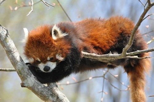 5月20日 釧路市動物園へ行ってきました。