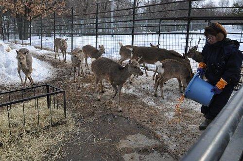 2月24日 おびひろ動物園 エゾシカ