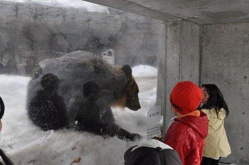 3月28日 円山動物園 エゾヒグマ 大