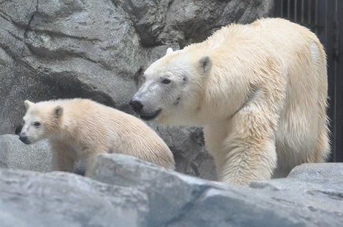 5月5日 男鹿水族館GAO クルミ親子&昼食