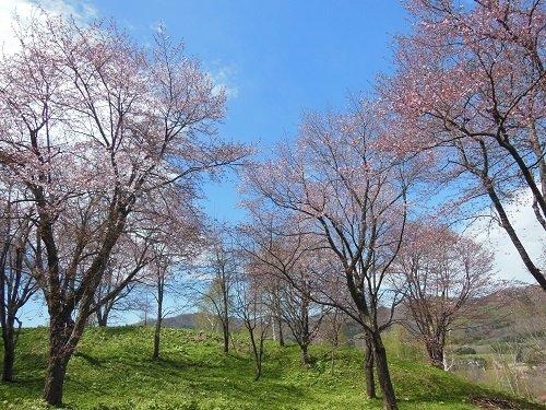 5月25日 滝上町 今日の濁川公園