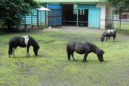 6月27日 おびひろ動物園 中央の草食動物たち