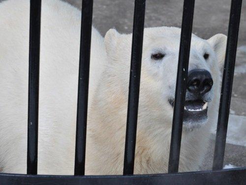 3月1~2日 釧路市動物園へ行きました。