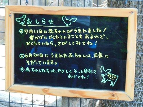 7月13日 旭山動物園 エゾシカ親子