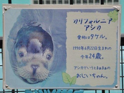 7月26日 おびひろ動物園 カリフォルニアアシカ タケル