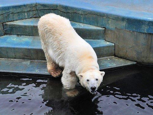 7月27日 釧路市動物園 お魚プレゼント・・・ツヨシ編とオマケ
