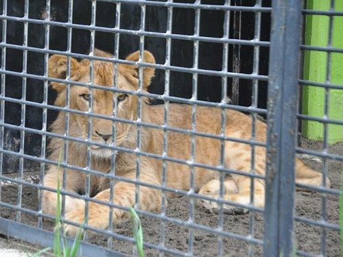 7月27日 釧路市動物園 猛獣舎の仲間たち