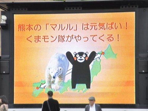 10月13日 熊本の「マルル」は元気ばい! くまモンも!