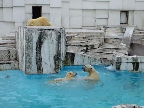 懐かしい写真シリーズ・・・2009年10月31日 円山動物園 イコキロ