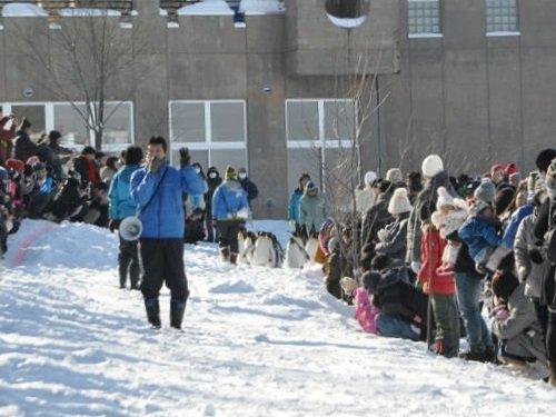 1月18日 旭山動物園 11時からのペンギン散歩